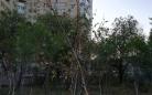 В Караганде посаженные вместо вырубленных деревья погибли