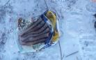 В поселке Щербаковский у браконьеров нашли головы и шкуры сайгаков