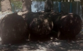 Карагандинцев озаботил демонтаж газового оборудования во дворе жилого дома