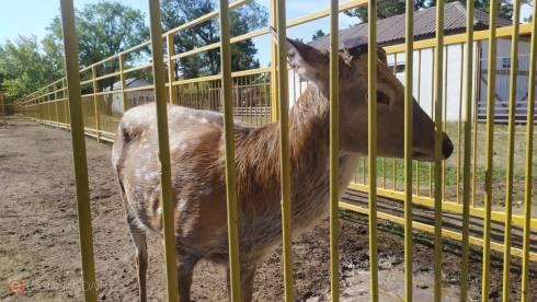 В Карагандинском зоопарке уволили ветеринарного врача после истории со спиливанием рогов у оленей