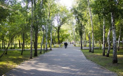 В Караганде провели инвентаризацию зеленых насаждений
