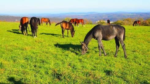 Земельный вопрос: Как вернуть к жизни пустующие пастбища