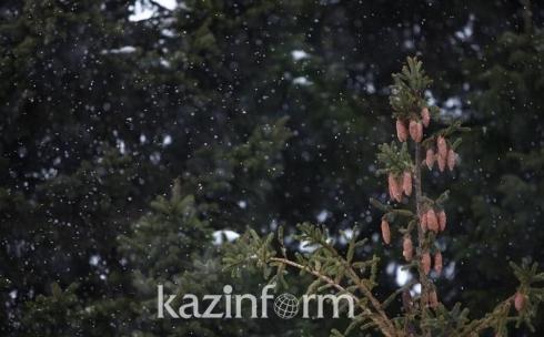 Елки возьмут под круглосуточную охрану в Карагандинской области