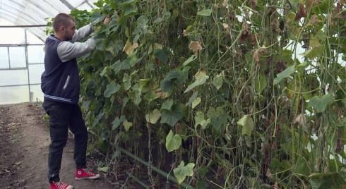Круглый год выращивает огурцы молодой карагандинский предприниматель