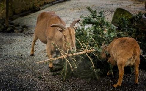 Куда можно деть новогоднюю елку в Караганде?