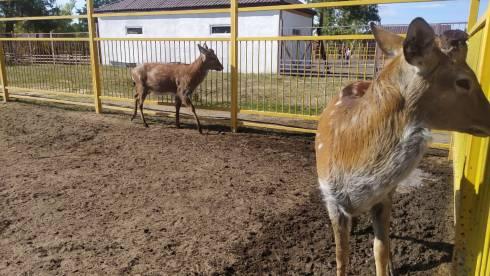 Мы создаём для животных все необходимые условия, но опять получаем негатив – руководство карагандинского зоопарка