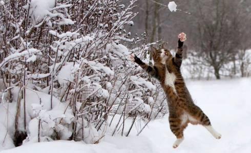 Cиноптики рассказали какой будет предстоящая зима в Казахстане
