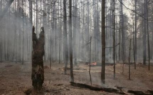 В Карагандинской области восстанавливают леса, уничтоженные пожарами
