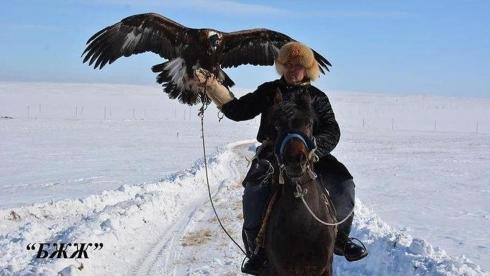 Возвращаясь к традициям: В Карагандинской области прошёл чемпионат по охоте с ловчими птицами