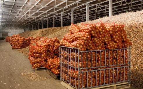 В этом году стабфонд Карагандинской области не будет закупать капусту, лук и картофель
