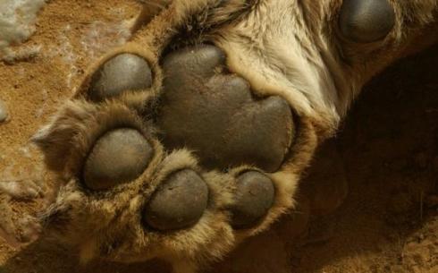 В Центральном парке Караганды нашли тело мёртвого льва