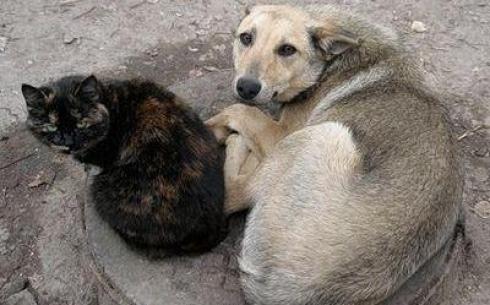 911 человек обратились в медучреждения Караганды с укусами бездомных животных в 2015 году
