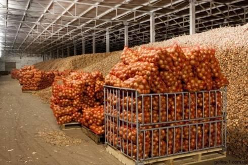 Запас овощей для сдерживания роста цен создан в Караганде