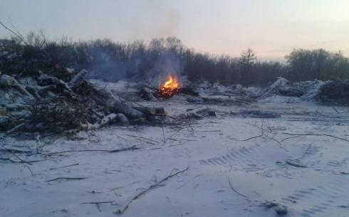 На месте вырубленных деревьев построят дома