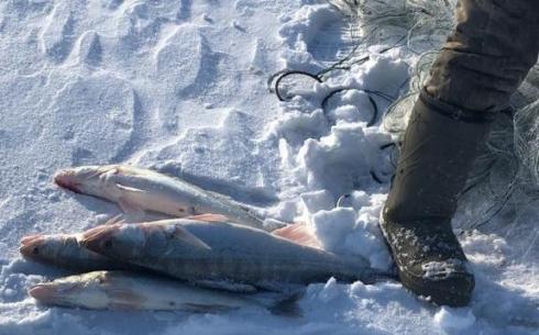 Житель  Актогайского района незаконно поймал 78 килограммов рыбы