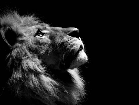 Карагандинская полиция установила личность владельца захороненного в Центральном парке льва