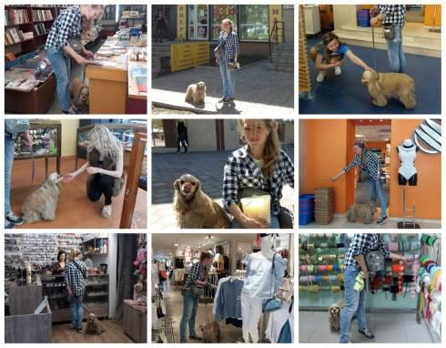 В магазин с собакой