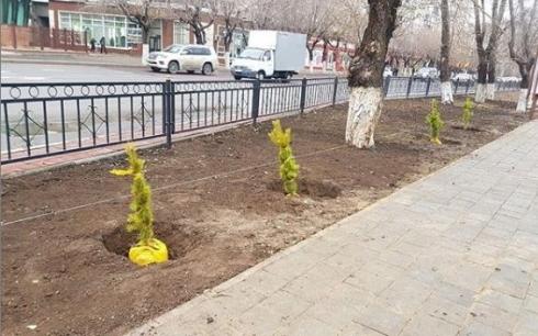 После инцидента с разлитым бетоном в сквере Караганды посадили деревья