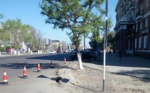 Карагандинцев волнует судьба дерева на ремонтируемом перекрёстке Бухар жырау-Комиссарова