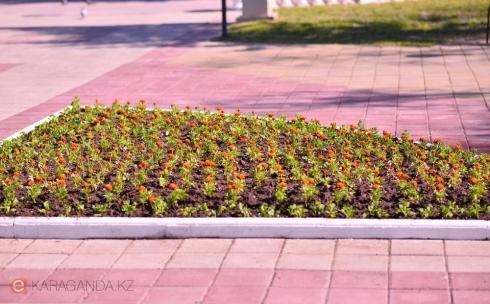 В Караганде готовятся осуществить новую концепцию озеленения