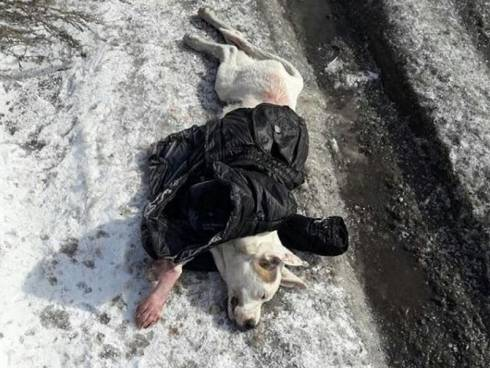 Житель Шахтинска не будет нести ответственность за убийство своей собаки