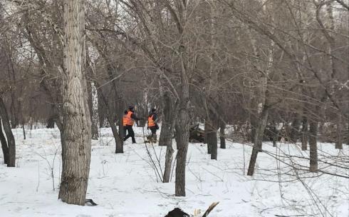 Зачем в Центральном парке Караганды снова рубят деревья?
