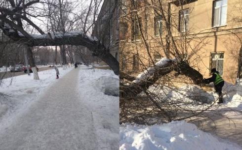 В Караганде нависшее над тротуаром дерево угрожало безопасности пешеходов