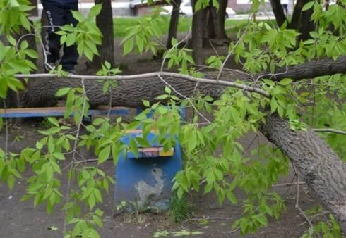 Разрешение на удаление аварийных деревьев на придомовой территории не требуется