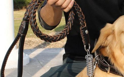 Хозяйку-живодерку осудили карагандинцы в соцсети за избиение собаки