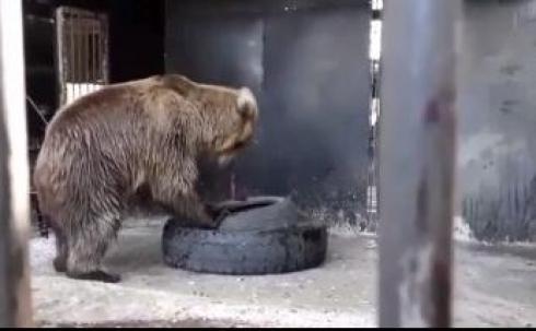В зоопарке Караганды обновили вольер для бурого медведя