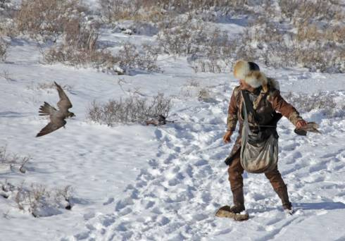 Стали известны результаты международного турнира «Ұлы дала мұрасы» по охоте с ловчими птицами и собаками