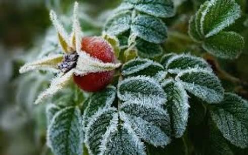 В Карагандинской области ожидаются заморозки