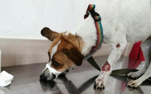 В Караганде нашли изувеченную собаку
