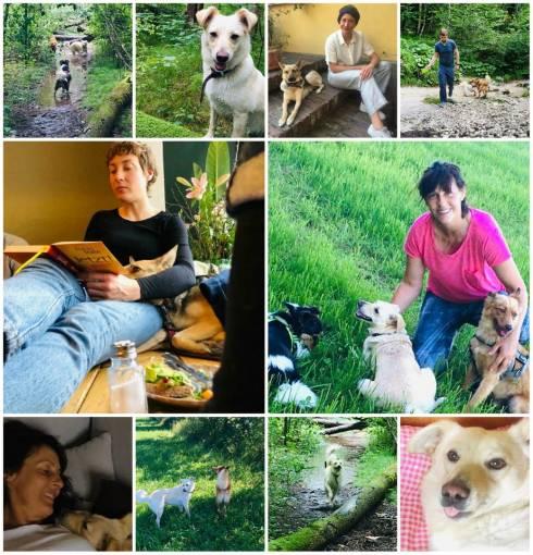 Как сегодня живут собаки, спасенные иностранцами в Казахстане