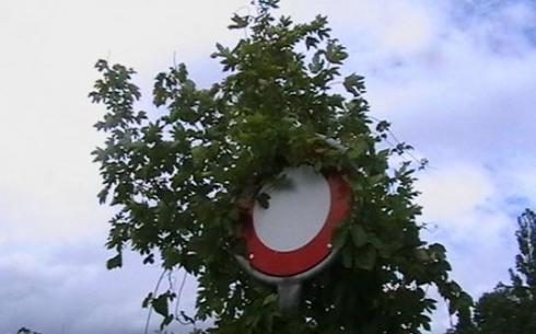 В Караганде продолжается обрезка деревьев