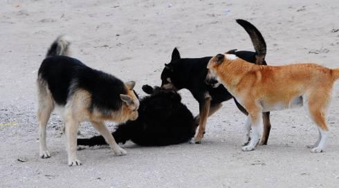 Бродячие собаки напали на школьницу в Балхаше