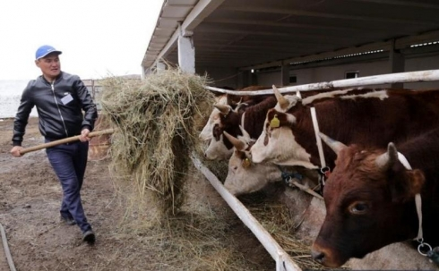Как житель Балхаша стал успешным животноводом