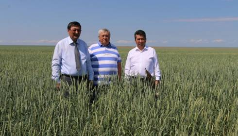 В Нуринском районе ТОО «Шахтёрское» внедрило полный цикл цифровой технологии выращивания картофеля