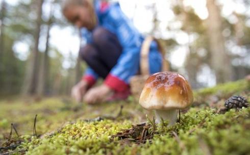 Выезд за грибами в Карагандинской области не запрещали