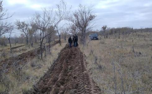На территории государственного лесного фонда Карагандинской области высадили деревья