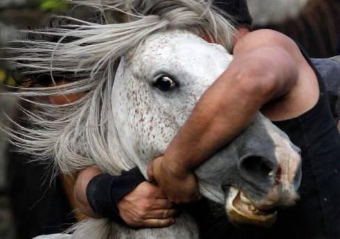Разделанная туша лошади обнаружена в авто жителя Карагандинской области