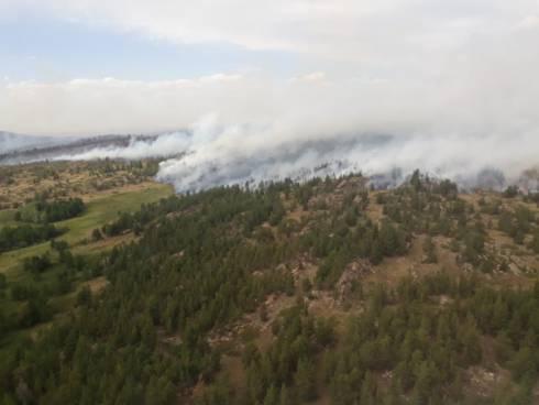 Появилось видео лесного пожара в Нацпарке в Карагандинской области