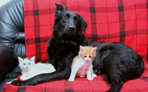 В Караганде разработали новые правила содержания домашних животных
