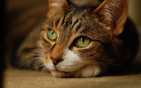 Шесть пуль нашли в организме кота в Караганде