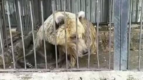 Вольер медведя в зоопарке Караганды возмутил пользователей Казнета