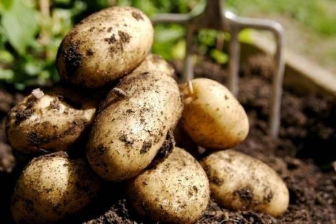 До 300 тенге может подорожать картофель зимой в Казахстане - исследование