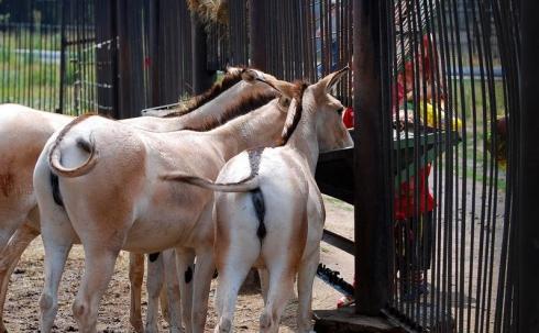 Карагандинцы закармливают животных в зоопарке до вздутия живота