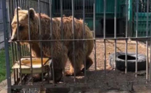 Карагандинцы жалуются на плохое содержание животных в зоопарке