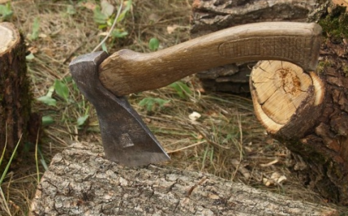 1800 деревьев хотят вырубить ради строительства газораспределительных сетей в Караганде