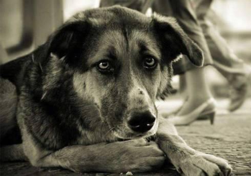 Ужесточить наказание за жестокое обращение с животными требуют казахстанцы